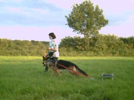 den schlitten zieht mein pferd